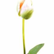 fleur-artificielle-tulipe-vert-2