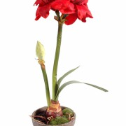 plante-artificielle-amaryllis-1