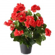 plante-artificielle-begonia-rouge-1