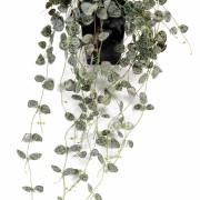 plante-artificielle-ceropegia-1