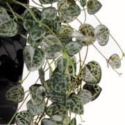 plante-artificielle-ceropegia-2