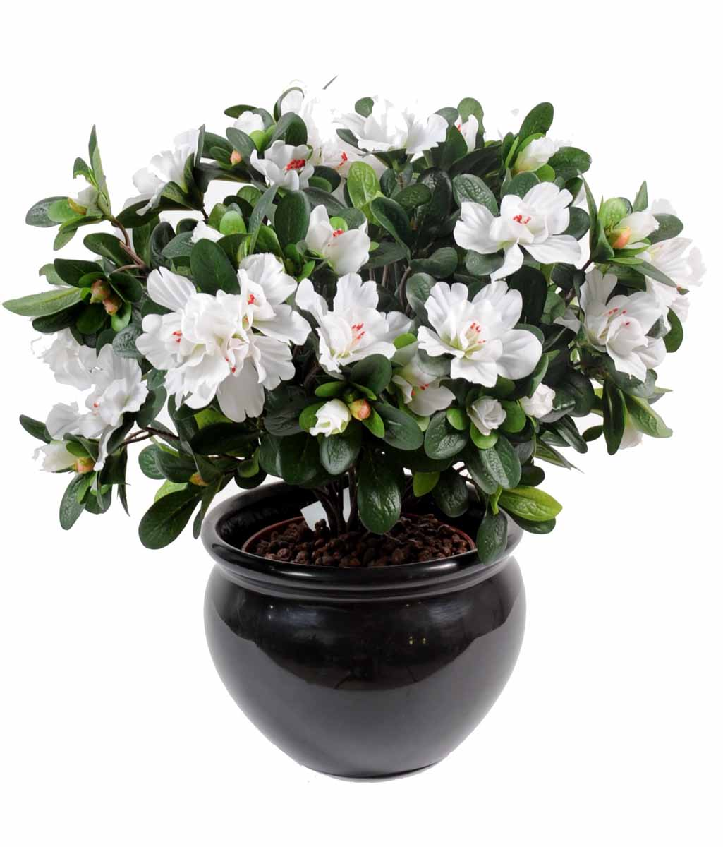 Azal e blanc decobac for Plantes fleuries exterieur en pot