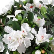 plante-artificielle-fleurie-azalee-blanc-2