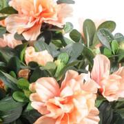 plante-artificielle-fleurie-azalee-peche-2
