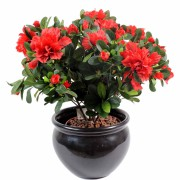 plante-artificielle-azalee-rouge-1