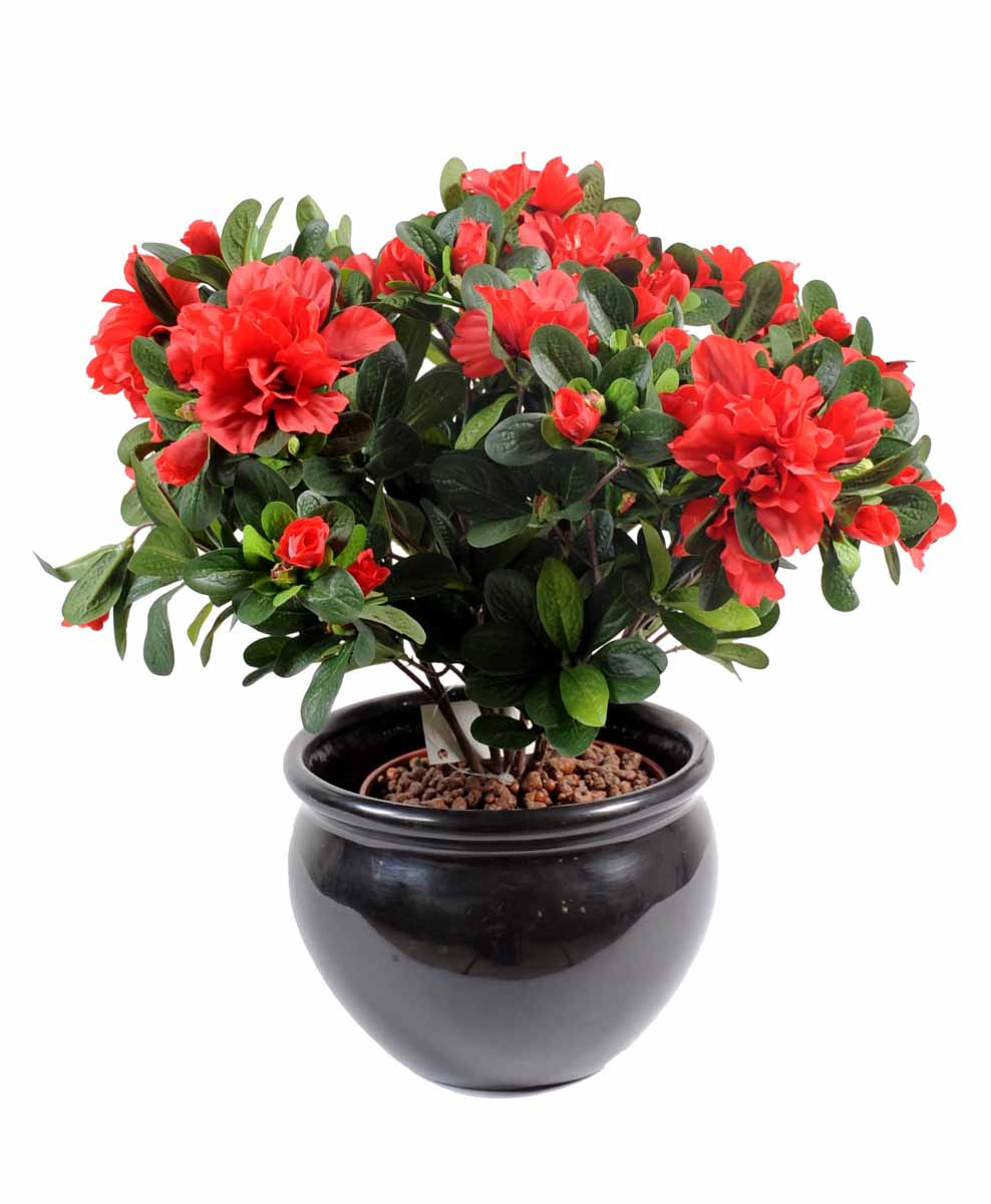 Plantes fleuries cat gories decobac for Plante rouge