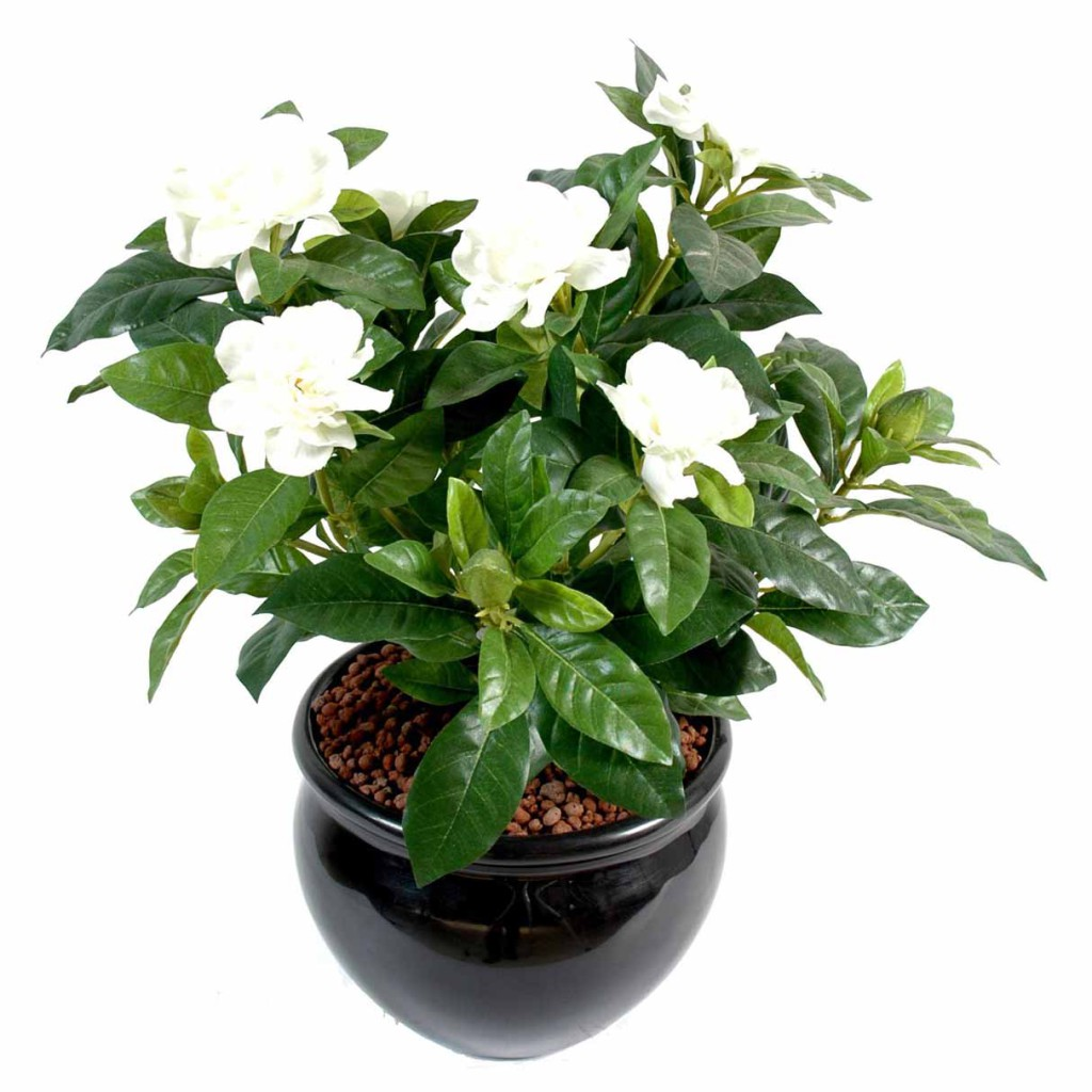 Gardenia artificiel decobac for Gardenia exterieur