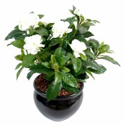 plante-artificielle-fleurie-gardenia-1