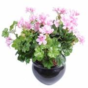 plante-artificielle-fleurie-geranium-lierre-rose-1