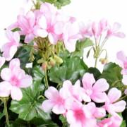 plante-artificielle-fleurie-geranium-lierre-rose-2