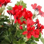 plante-artificielle-fleurie-geranium-lierre-rouge-2