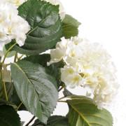 plante-artificielle-fleurie-hortensia-creme-2