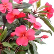 plante-artificielle-fleurie-impatiens-fuchsia-2
