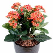 plante-artificielle-fleurie-kalanchoe-orange-1
