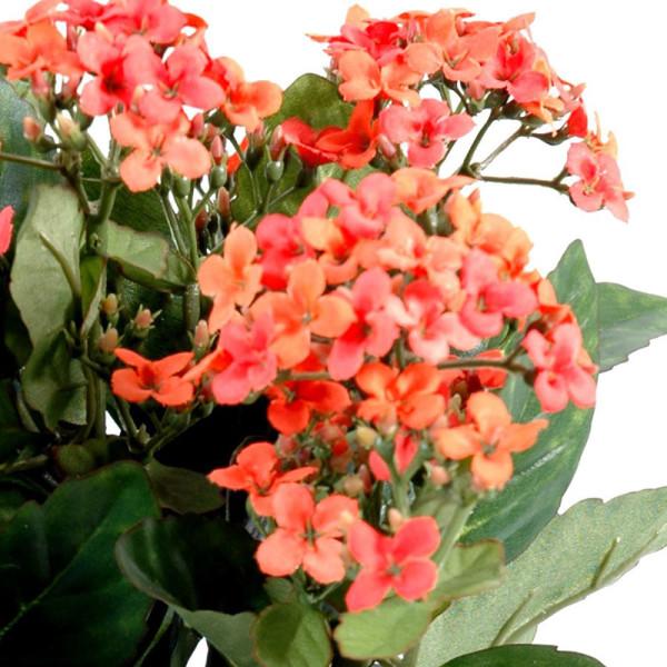 Kalanchoe orange decobac for Plante orange