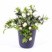 plante-artificielle-fleurie-marguerite-plast-1