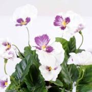 plante-artificielle-pensee-blanc-lavande-2