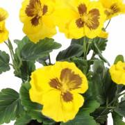 plante-artificielle-fleurie-pensee-jaune-2