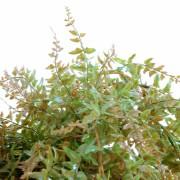 plante-artificielle-fougere-chute-plast-2