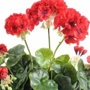plante-artificielle-geranium-rouge-2