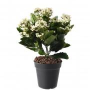 plante-artificielle-kalanchoe-rose-1