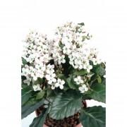plante-artificielle-kalanchoe-rose-2