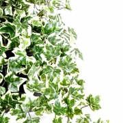 plante-artificielle-lierre-