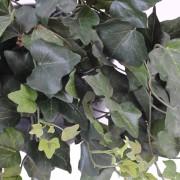 plante-artificielle-lierre-gala-vert-2