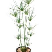 plante-artificielle-papyrus-10