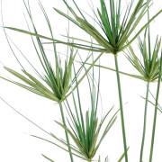 plante-artificielle-papyrus-11