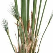 plante-artificielle-papyrus-cyperus-3