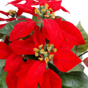 plante-artificielle-poinsetia-rouge-2