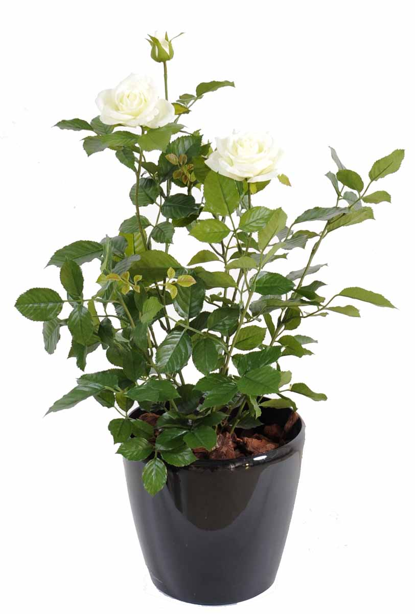 plante-artificielle-rosier-royal-blanc-3