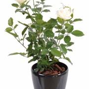 plante-artificielle-rosier-rose-creme-3