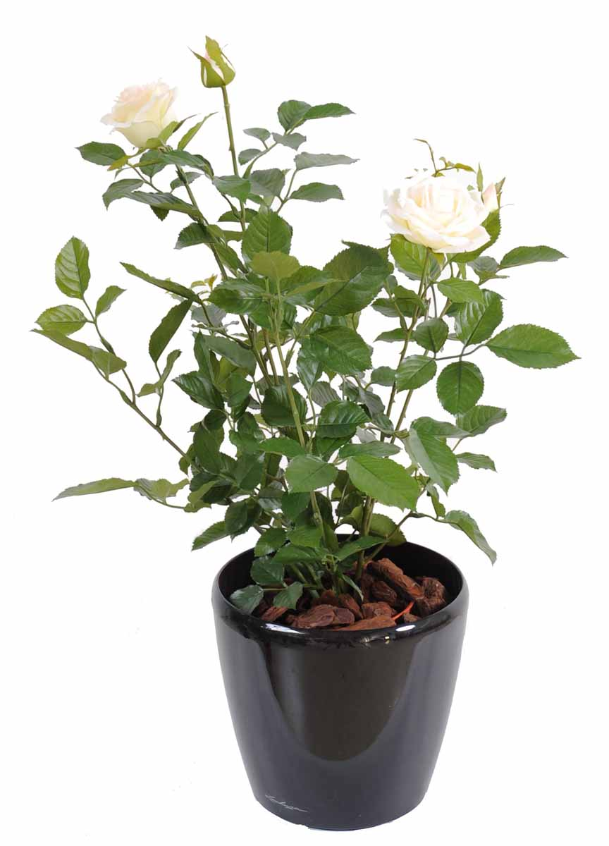 plante-artificielle-rosier-royal-rose-creme-3