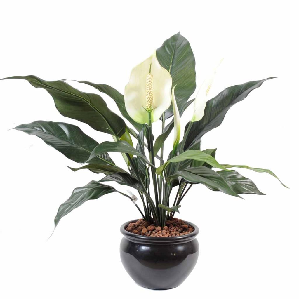Spathiphyllum 2 fleurs 1 bouton decobac for Plantes artificielles rennes