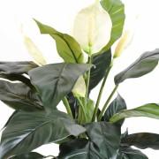 plante-artificielle-spathiphylium-4