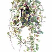 plante-artificielle-tradescantia-1