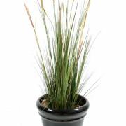 plante-artificielle-zanichellie-des-marais-1