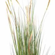plante-artificielle-zanichellie-des-marais-2
