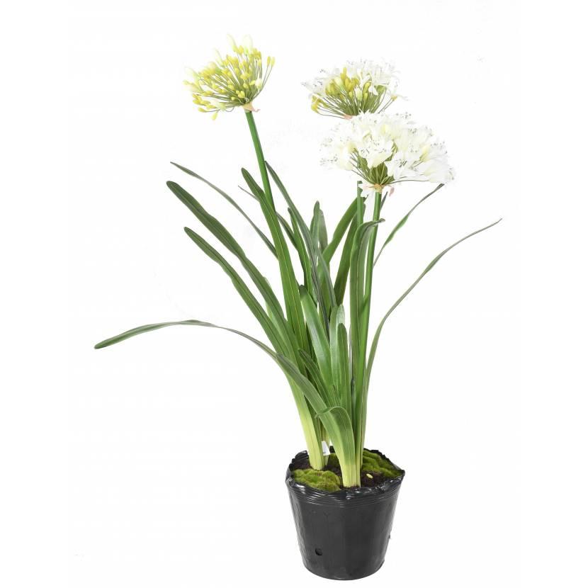 plante-artificielle-agapanthe-blanche-3146-58-1