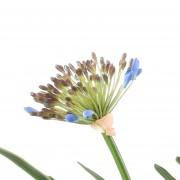 plante-artificielle-agapanthe-bleue-3146-80-4