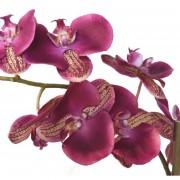 phalaenopsis-orchidee-artificielle-3138-31-2