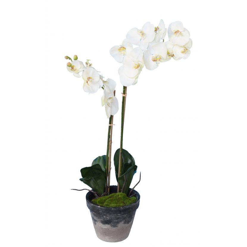 phalaenopsis-orchidee-artificielle-3138-58-1