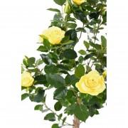 plante-artificielle-rosier-jaune-1693-02-2