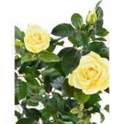 plante-artificielle-rosier-jaune-3410-02-2